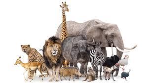 animals-s